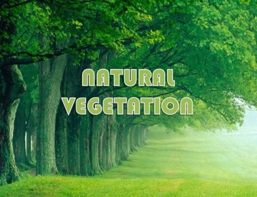 Natural Vegetation – Geography Study Material & Notes