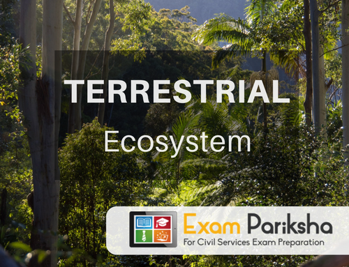Terrestrial Ecosystem: Types of Forest, Deforestation, Grassland Ecosystem