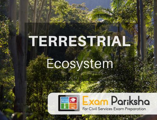 Terrestrial Ecosystem: Types of Forest, Deforestation, Grassland Ecosystem